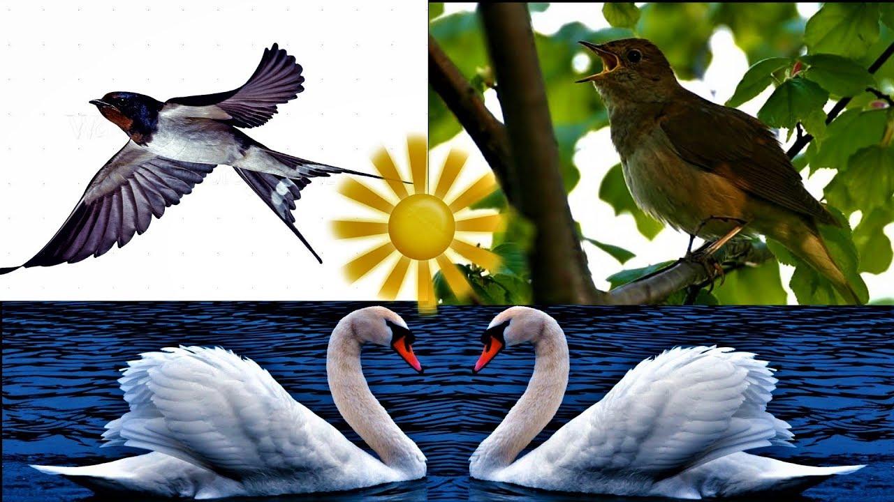 Păsările călătoare!